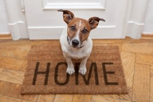 Pet Sitting Lithia Florida